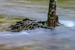 Île d'arbre au milieu d'une rivière faisante rage Photographie stock libre de droits