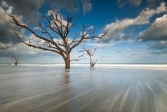 Île d'Edisto de plage de Boneyard de compartiment de botanique de Charleston photographie stock libre de droits