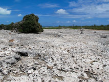 Île d'iguane, Cayo largo, le Cuba images libres de droits