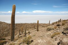 Île d'Incahuasi au milieu des appartements de sel d'Uyuni Photo libre de droits