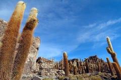 Île d'Incahuasi dans Uyuni Photo stock