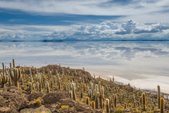 Île d'Incahuasi, Salar de Uyuni, Bolivie Photos libres de droits
