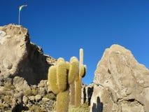 Île d'Incahuasi. Salar de Uyuni. La Bolivie. Photographie stock libre de droits
