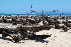Île d'oiseau Photo stock