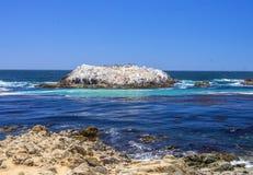 Île d'oiseaux, 17 milles d'entraînement Images libres de droits