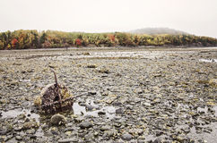 Île de barre dans le port de barre, Maine Image stock