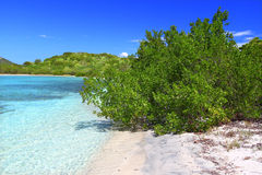 Île de boeuf - Îles Vierges britanniques Photos libres de droits