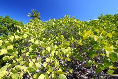Île de boeuf - Îles Vierges britanniques Image libre de droits
