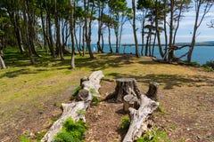 Île de Brownsea dans le port de Poole Images stock