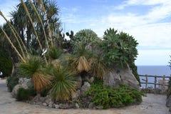 Île de cactus Photo libre de droits
