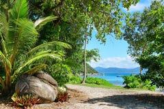 Île de Fitzroy, Queensland, Australie, grande région de barrière photo libre de droits