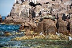 Île de joint d'islotes de visibilité directe au Mexique Basse-Californie photos libres de droits