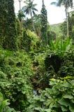 Île de jungle après un matin de pluie photos stock