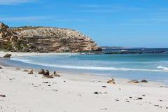 Île de kangourou Images stock