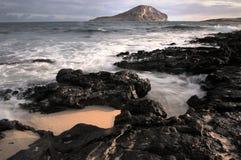 Île de lapin Images stock