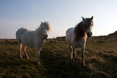 Île de Llanddwyn Photos libres de droits