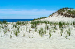 Île de Long Beach de dunes Photographie stock