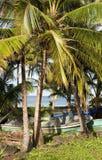 Île de maïs de mer des Caraïbes de palmier de bateaux de pêche grande Nicaragu Photographie stock libre de droits