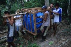 Île de MARAJO. (Amazone). LE BRÉSIL Photographie stock