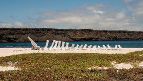 Île de Mosquera, Galapagos, Equateur Photos libres de droits