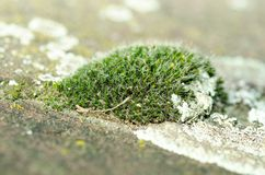 Île de mousse verte sur la fin concrète de surface de voie vers le haut du foyer sélectif Photo libre de droits