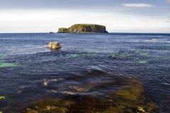 Île de moutons du rivage de mauvaise herbe de mer, côte d'Antrim Photo libre de droits