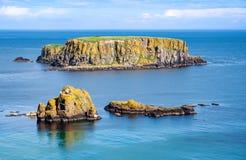 Île de moutons en Irlande du Nord, R-U Photographie stock libre de droits