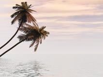 Île de paume Photo libre de droits
