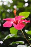 Île de Philippines Coron Photos stock