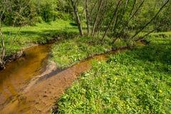 Île de rivière de forêt photo libre de droits