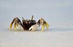 Île de Samed, crabe sur la plage, Thaïlande Photos stock