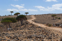 Île de Socotra, île, l'Océan Indien, Yémen, Moyen-Orient Photographie stock libre de droits
