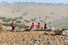 Île de Socotra Image libre de droits