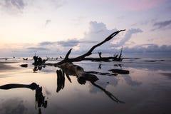 Île de taureaux photographie stock libre de droits