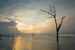 Île de taureaux photo libre de droits