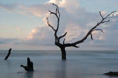 Île de taureaux photos libres de droits