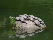 Île de tortue photographie stock