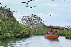 Île de tour de bateau d'oiseaux de frégate Photographie stock libre de droits