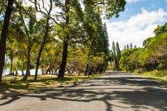Île des pins Photos libres de droits