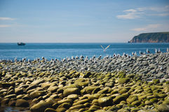 Île du Kamtchatka des oiseaux images stock