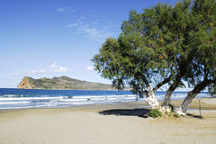 Île et arbre Photo stock