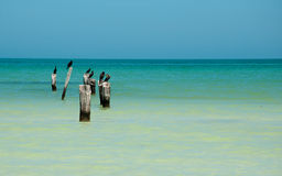 Île Holbox Photo stock