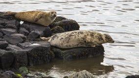 Île Irlande du Nord de Rathlin Photos libres de droits