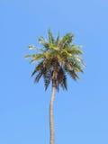 Île méditerranéenne rentrée par photographie Corse Photographie stock libre de droits