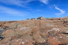 Île pierreuse du nord photo libre de droits