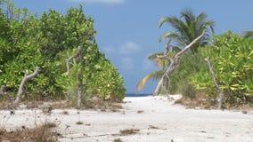 Île tropicale banque de vidéos