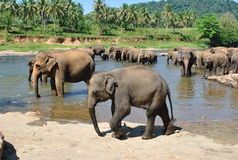 Île tropicale dans l'océan de Sri Lanka image libre de droits