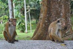 Île tropicale dans l'océan de Sri Lanka Photographie stock