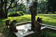 Île tropicale dans l'océan de Sri Lanka Photo libre de droits