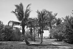 Île tropicale en noir et blanc Image libre de droits